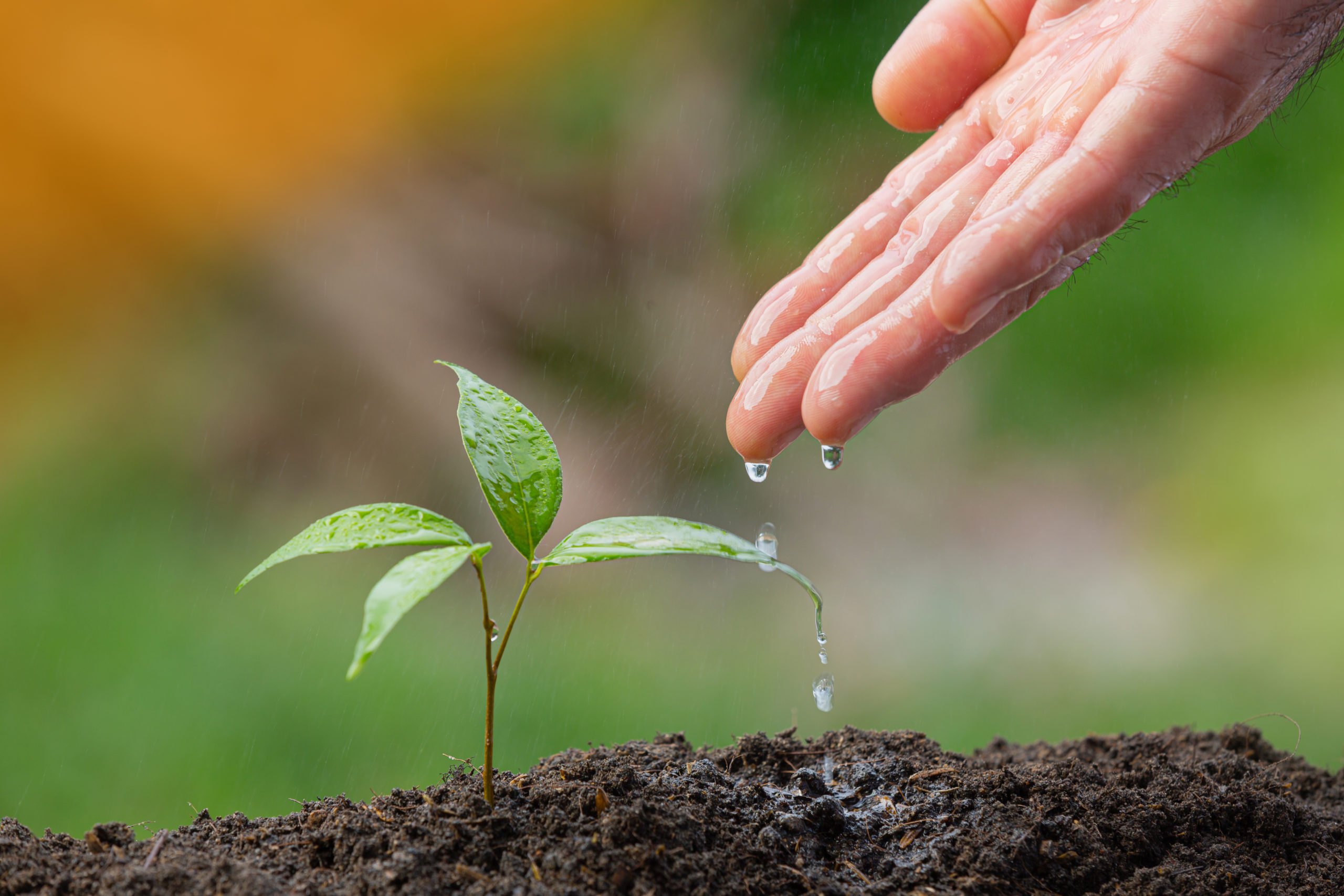 Wachstum aranea Projekte